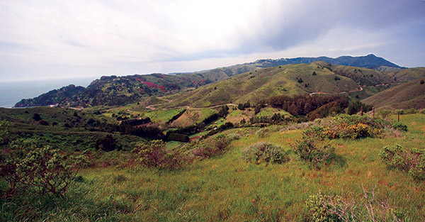 Green Gulch Farm Watershed Panorama